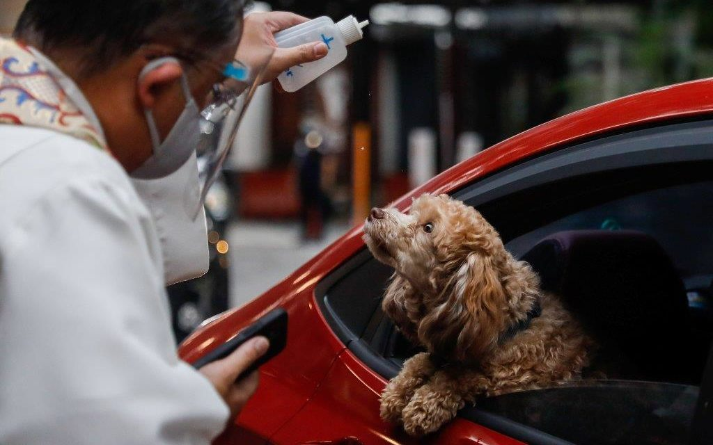 Parishes Offering Pet Blessings for You and Your Animal Friends